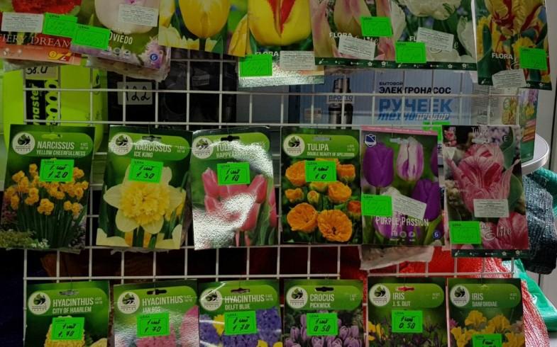 Луковицы цветов осенней посадки (тюльпаны, нарциссы ,крокусы, ирисы,гиацинты)
