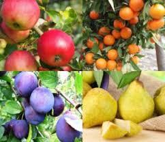 Плодовые деревья (яблоня, груша, слива, вишня, черешня, абрикос,персик) и кустарники (малина, смородина, ежевика, крыжовник)