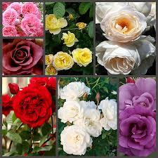 Розы (каперсы) пр-во Сербия в ассортименте