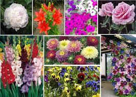Луковичные цветы весенней посадки  и корневище многолетников(пр-во Нидерланды) в ассортименте